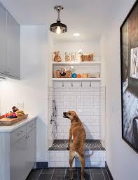 doggy shower