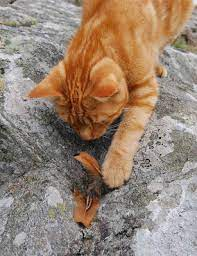 We Three, Ginger cats tales: Ginger bird