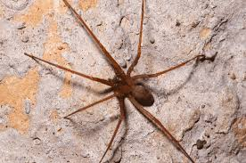 Learn More About Common Spiders In South Florida
