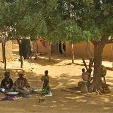 the history of the neem tree justneem neem trees