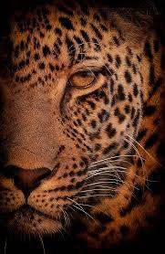 portfolio of african wildlife nature