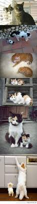 128 Best Cutty Images On Pinterest Animals Adorable Animals And
