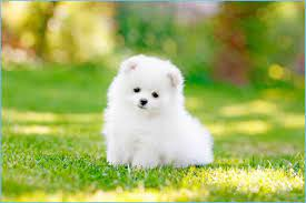 Cute Puppy Backgrounds For Android ...