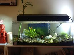 15 Aquarium Light Aquarium With Platy Fish Planted Low Light Low Tech 15