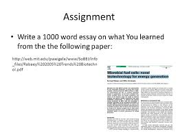 essay sample in word high school experience essay essay 1000 word essay