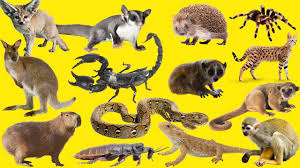 Wild Animals for kids | Top Wild Animals Best Friends for Children and  Families | Pets for kids