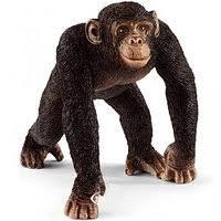 <b>Шимпанзе</b> в Кемерово. Сравнить цены, купить потребительские ...
