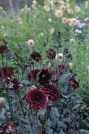 beautiful cut flower garden