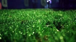 lawnatnightcloseupofgreengrasscloseupgrassbackgroundtrimmedgrass onmeadowatnightgreengrasssoccerfieldpanningongrassfieldatpark green grass soccer field s55 green