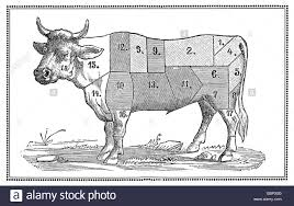 Antique Butcher Chart Old Beef Chart With Numbered Cuts Stock Photo 76106324 Alamy