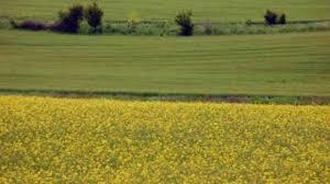 Сватівським відділом Старобільської місцевої прокуратури заявлено позов про припинення права постійного користування земельною ділянкою, яка незаконно використовувалась одним з фермерських господарств району