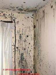 how to get rid of mold in your closet how to clean or remove toxic mold in buildings owner occupants guide to mold remediation how to get rid of mold in