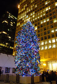 christmas tree lighting chicago. The Christmas Tree In Daley Plaza, Chicago Lighting