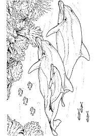 Dessin De Escargot Imprimer Dauphin L L L L L L Duilawyerlosangeles Dessin De Escargot Imprimer Dauphin L