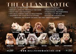 American Bully Color Chart Bully King Magazine