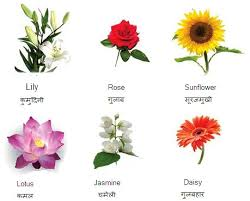 all flowers name with pictures flowers name in hindi and english photo