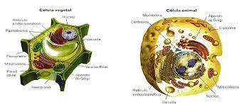 Biología 3ESO