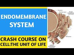 Endomembrane System Flow Chart Part 4 Ncert Crash Course Cell The Unit Of Life