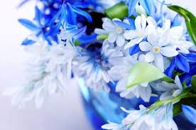 beautiful blue flowers 01 hd picture