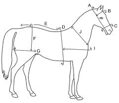 Horse Harness Measurement Guide