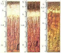 Реферат основные типы почв ru