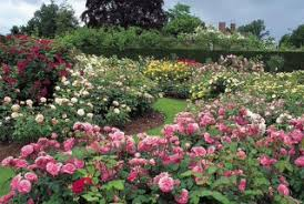 Small Picture Learn to grow Roses with the Garden Design Academy
