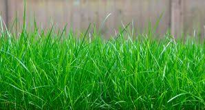 Tall Grass Texture Stock Photos Royalty Free Pictures
