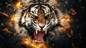 tiger face wallpaper hd. Brilliant Wallpaper Animals Tiger Face HD Wallpaper Desktop Background Intended Tiger Hd R