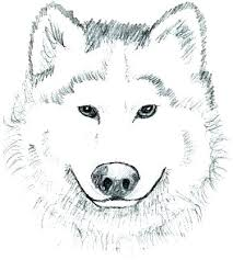 Wolf Coloring Pages Realistic Arctic Wolf Coloring Pages Wolf Color