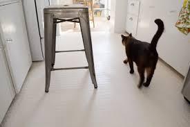 final cat on rubber floor 1