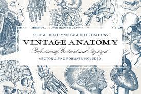 Vintage Illustrations 76 Vintage Anatomy Illustrations Design Cuts