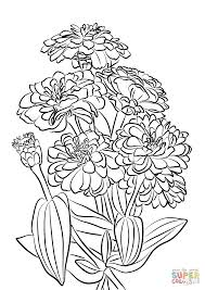 Youth And Age Zinnia Flowers Coloring Page Free Printable Coloring
