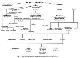 Biological Classification Chart Quick Notes On Plant Taxonomy