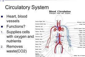 Cardiovascular System Blood Flow Chart Google Search