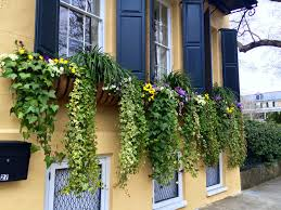 Flower box design Cedar These Window Boxes In Charleston Are All Separate But They Have Identical Plantings That Read As One Long Box The Impatient Gardener The Definitive Guide To Window Box Design The Impatient Gardener