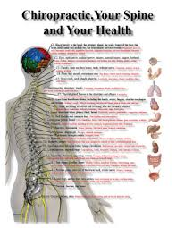 Chiropractic Nerve Chart Poster