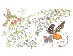 Small Picture Quinta Mazatlan Hummingbird Garden Legend