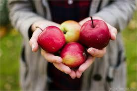 Những hình ảnh quả táo đẹp, độc đáo và ấn tượng nhất