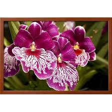 purple butterfly orchids framed print wall art by richard t nowitz on orchids wall art with purple butterfly orchids framed print wall art by richard t nowitz