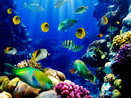 Free Fish Backgrounds Under Fontanacountryinn Com