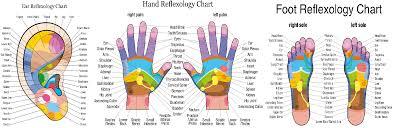 Eunice Ingham Reflexology Chart 12 Ce Hour Reflexology Foot Hand Ear 2 Day Class