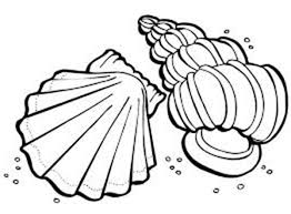 Small Picture Lions Paw and Florida Cerith Seashell Coloring Page Download
