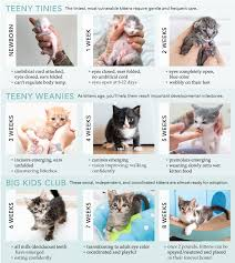 Age Of A Cat Chart Kitten Age Chart Janet Carr
