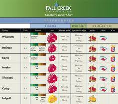 Blackberry Ripening Chart 11 Best Nursery Small Fruits Images Blueberry Bushes