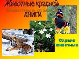 Презентация на тему Животные Красной книги скачать бесплатно и без  Презентация на тему Животные Красной книги