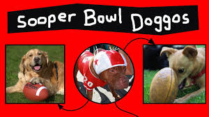 Doggos Do The Sooper Bowl