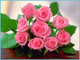 beautiful rose wallpaper hd 11x11