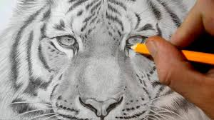 tiger face drawing pencil.  Face Intended Tiger Face Drawing Pencil G