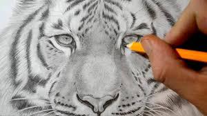 easy tiger pencil drawing. Delighful Pencil YouTube Premium And Easy Tiger Pencil Drawing