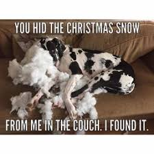Funny Quotes, Captions, and Memes | A community of Great Dane lovers! via Relatably.com
